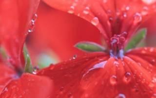 Как защитить цветы на подоконнике от солнца