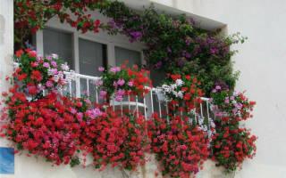 Какие цветы посадить на лоджии